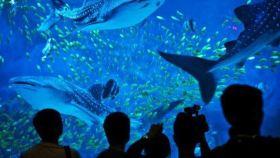 海昌鲸鲨馆