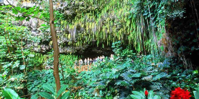 蕨类植物洞