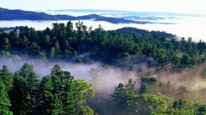 伊春五营国家森林公园门票