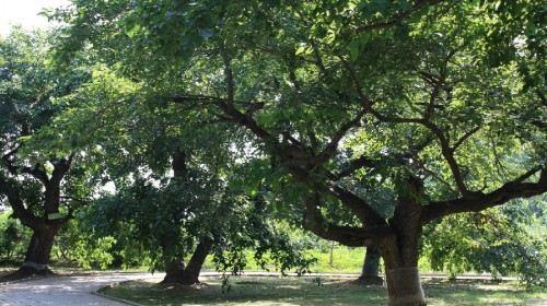 地址(位置,怎么去,怎么走):  夏津黄河故道森林公园  标签: 旅游景点