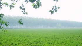 昆仑药用植物观光园