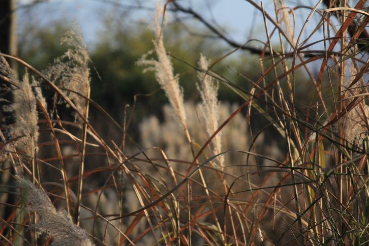 壁纸 草 动物 绿色 鸟 鸟类 雀 植物 桌面 750_500