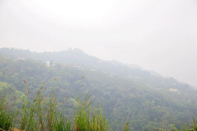 【加游站】【台湾】漫步云端:茶园里的森林城堡