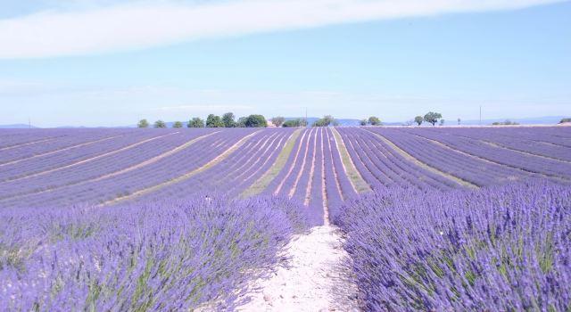 一 南法自驾 古堡 薰衣草