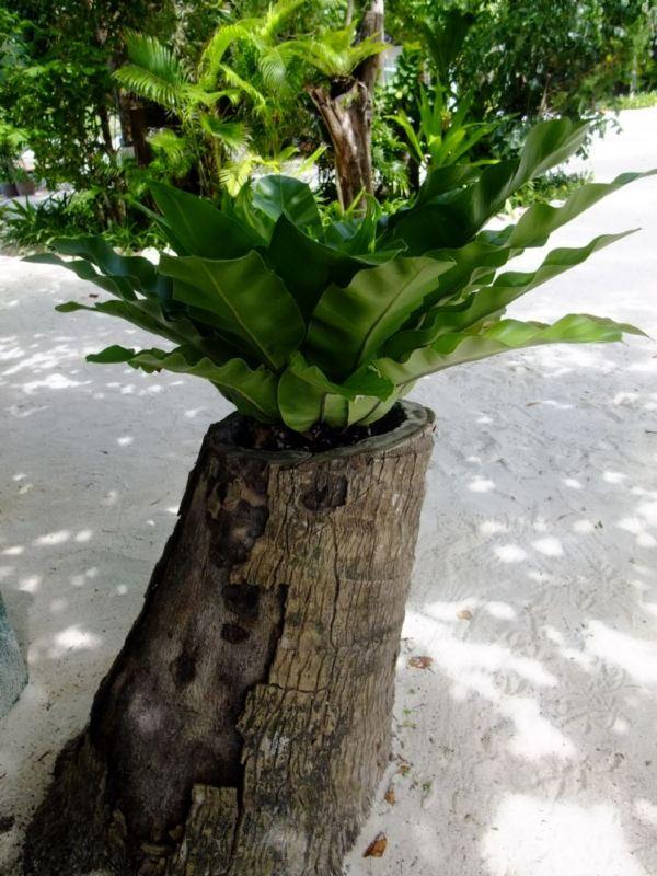 透明免抠热带树素材