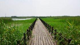 杭州湾湿地中心