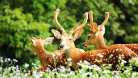 长隆野生动物世界
