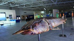 北大荒鱼展馆