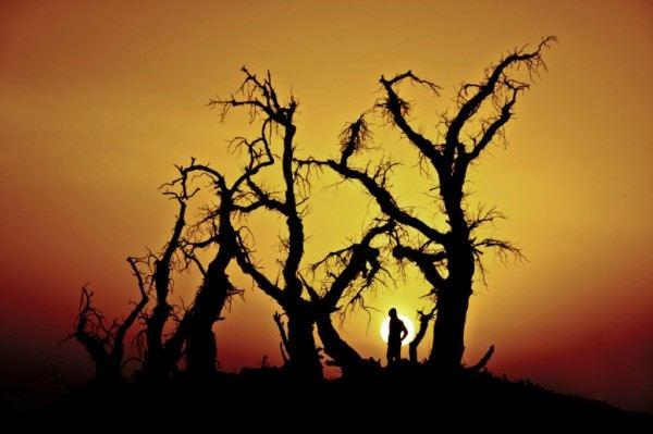 迎来了怪树林中的大漠日落 断肠人在天涯 夕阳西下