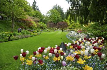 但英式的规划,布查花园还是那么吸引人,雨水让花园宛若.