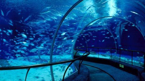 海洋动物非常多,还有潜水表演,里面的鲸鱼非常可爱,小朋友们可喜欢啦.