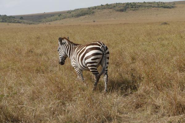 2013年9月 非洲观赏动物大迁徙 个人定制的豪华游 长篇