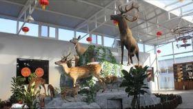 北京鹿世界牧场