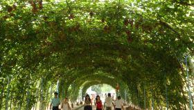 集发生态农业示范观光园