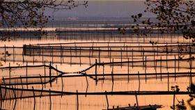 宝应湖国家湿地公园