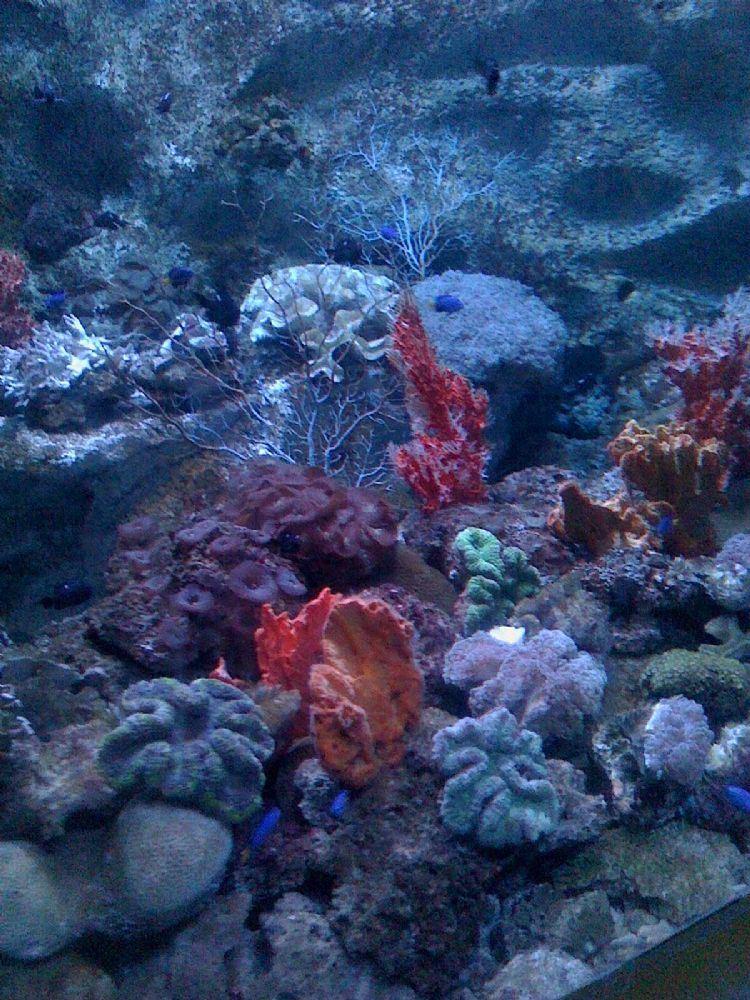 海底生物矢量图油画