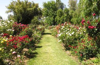 图片门票,曼谷攻略花园花园/地址/攻略/玫瑰三玫瑰武汉天图片