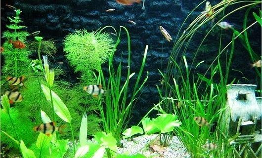 海底植物简笔画有颜色