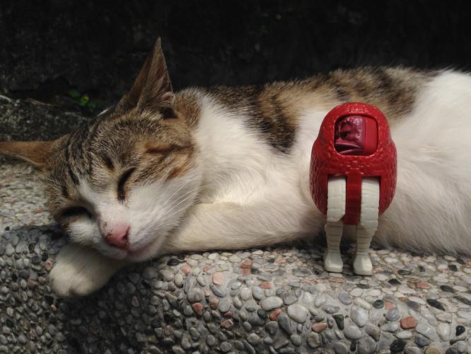 超萌猫咪手绘教程