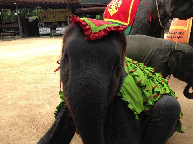 泰国5晚7日游--携程团-曼谷美食攻略【携程攻说说的游记吃插图图片