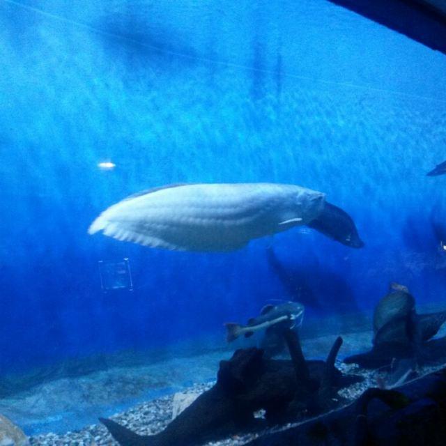 宁波海洋世界是融合海洋生物展示,大型海洋动物表演,海洋生态科普