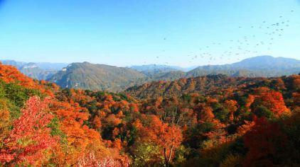 米仓山国家森林公园(大坝景区)