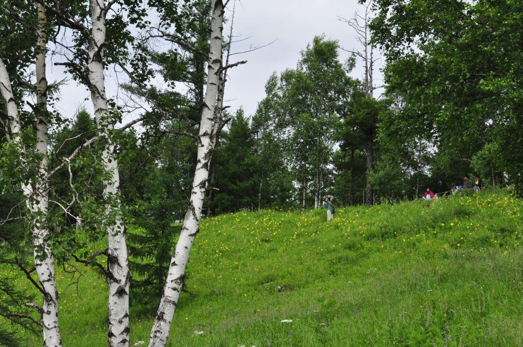 树 桦林 桦树 1024_680