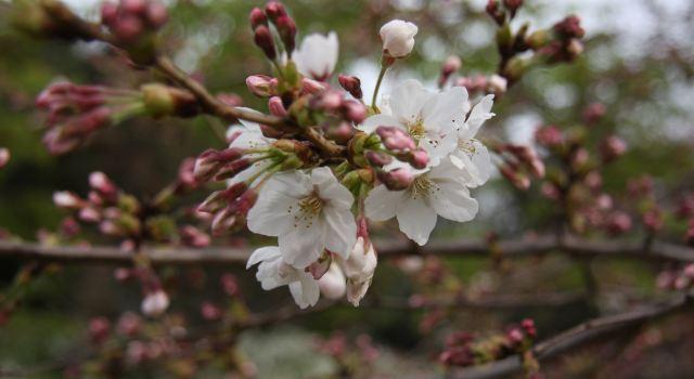 浪漫樱花梦-盘点日本5大最佳赏樱去处|大阪游