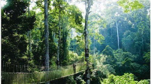 版纳植物丛林俯视