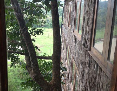 out spain hotel门口大树和小小的非洲菊: 树屋三四层楼高,没有电梯