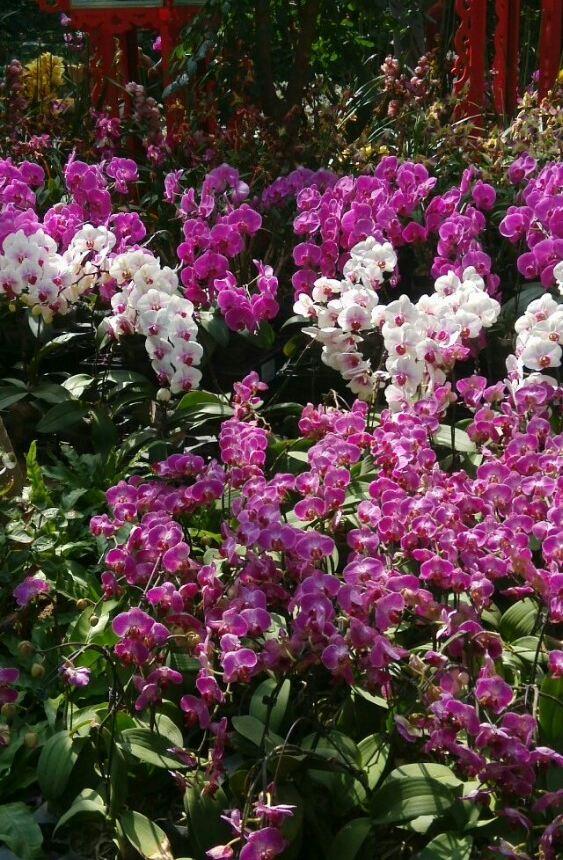 樱花和植物园 求武汉798club光谷别墅聚会店的价格?
