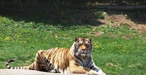 地址(位置,怎么去,怎么走):  泰安市泰山区环山路  标签: 动物园