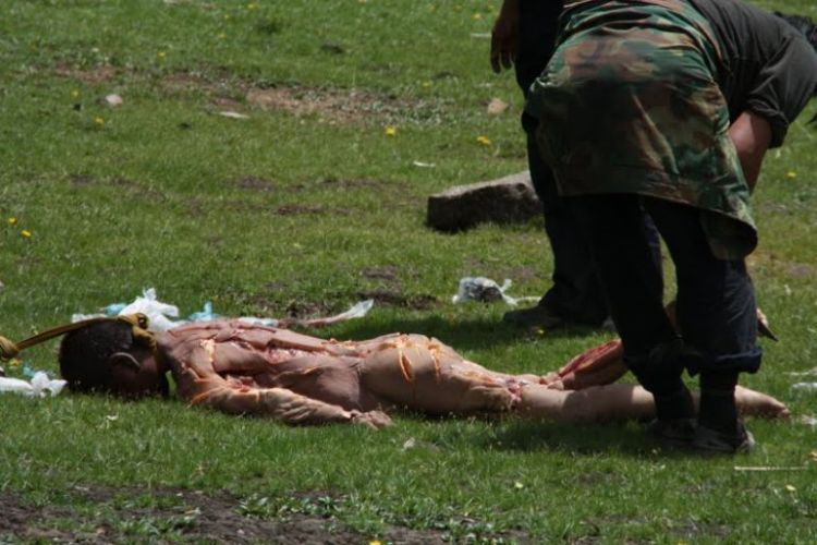 西藏有什么动物和图片