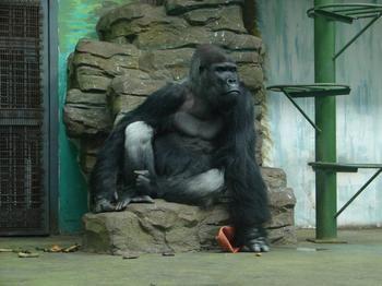 济南动物园门票多少钱_济南动物园门票价格_