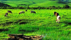 杜尔伯特草原