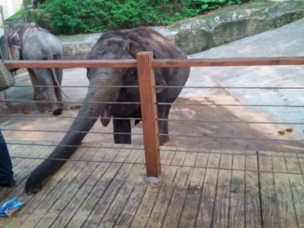 深圳动物园游玩
