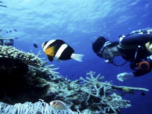 壁纸 海底 海底世界 海洋馆 水族馆 桌面 521_391