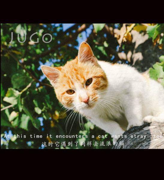 壁纸 动物 猫 猫咪 小猫 桌面 547_600