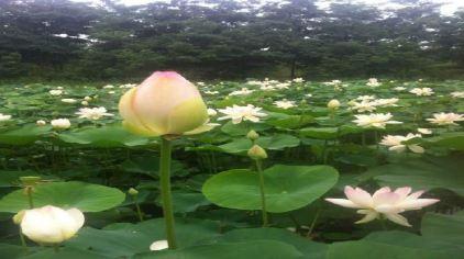聊城南湖湿地公园(原聊城植物园)地处聊城市南环路中段,占地面积1080