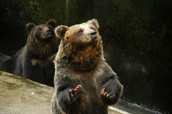这里的狗熊不怕人,(哈,当然狗熊是不应该怕人的.