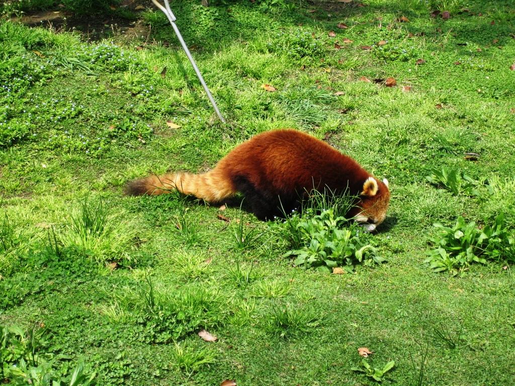 [我要去大溪地]上海野生动物园随手拍8