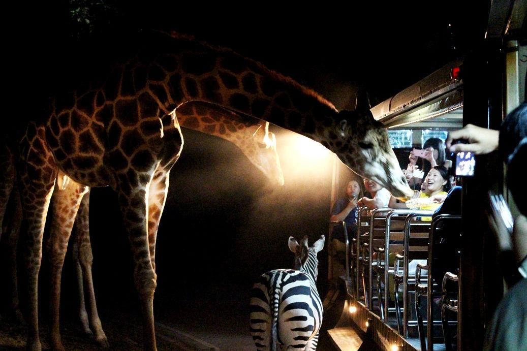 清迈 夜间动物园门票|含接送,中文导游 亲子游之选