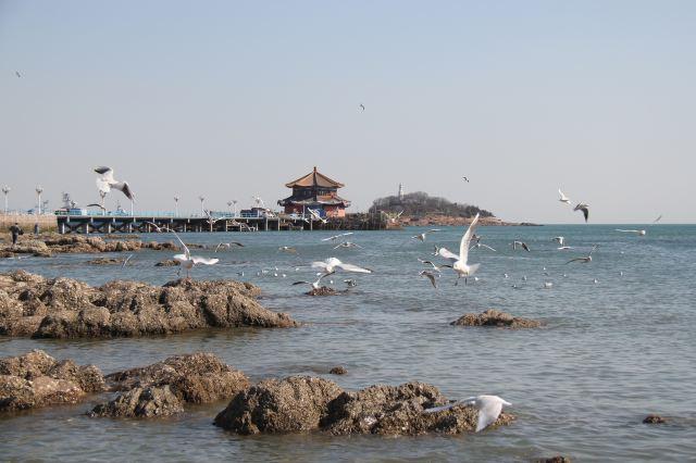 半天行驶260公里,中午入住青岛栈桥附近的华能宾馆.