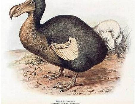 鸭子捉鸭子的毛吃有什么办法