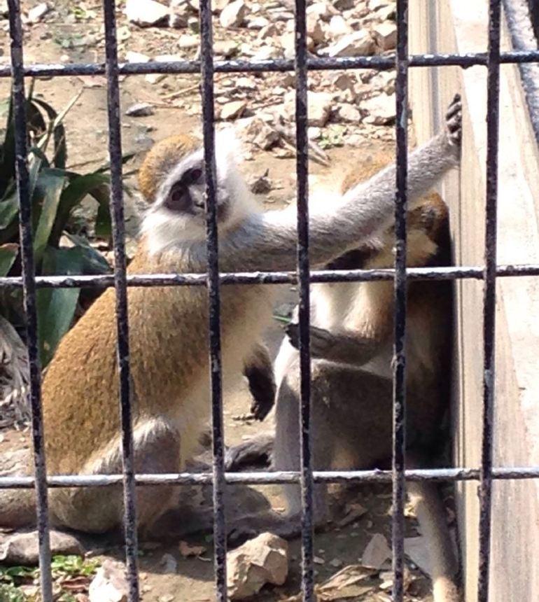 儿童医院到上海动物园东方明珠怎么走 上海动物园 从虹桥路上海动物