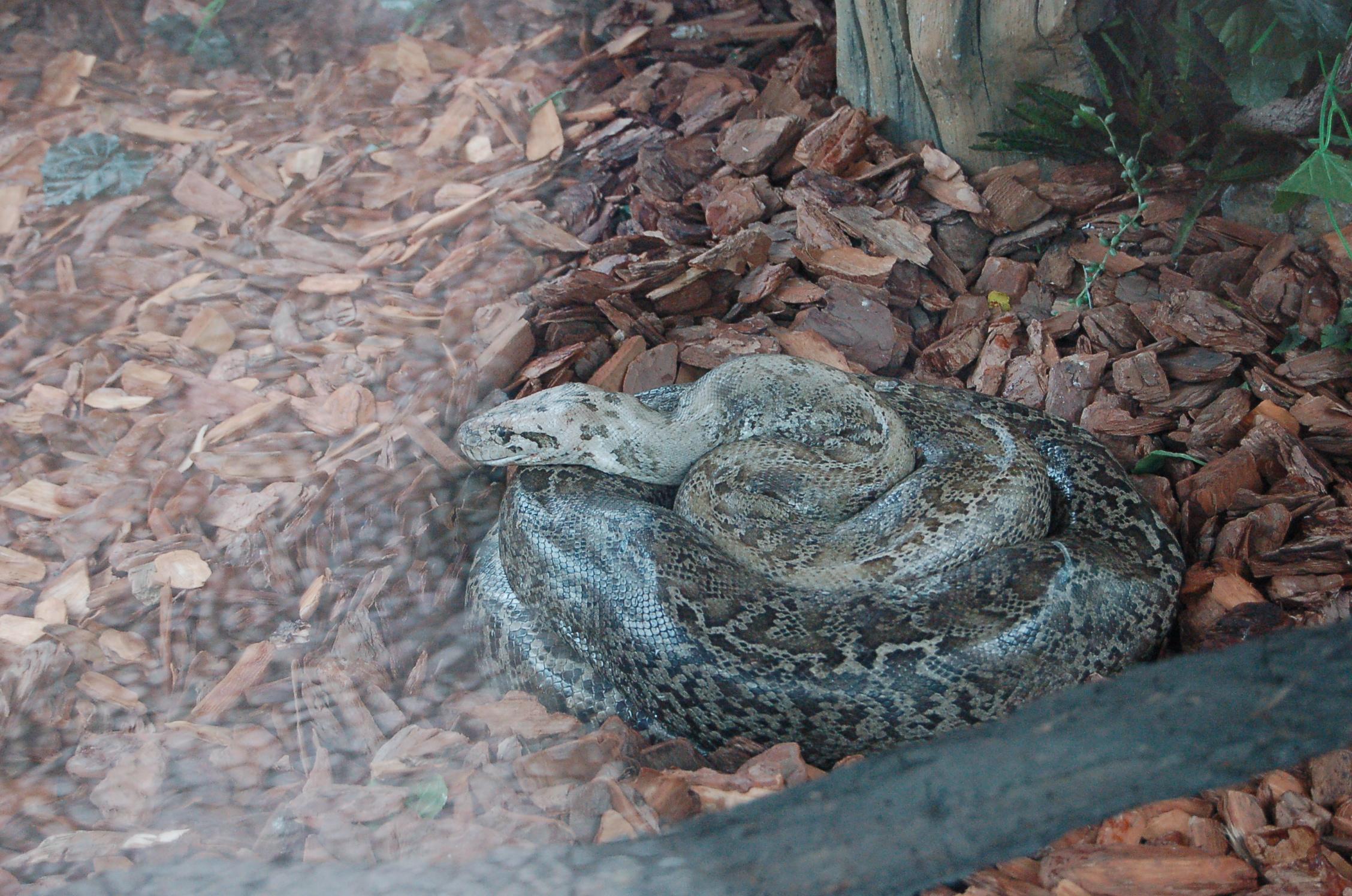 大连市森林动物园的大蟒蛇