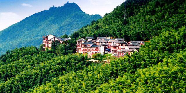 环境: 服务: 人均消费: 商户描述:风光旖旎的中国茶山竹海国家森林图片