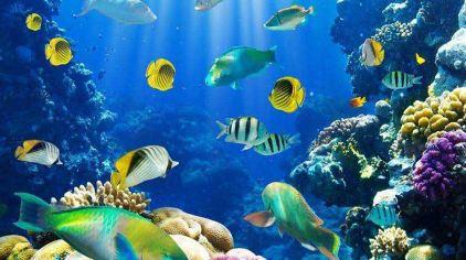 海底世界abc (3)