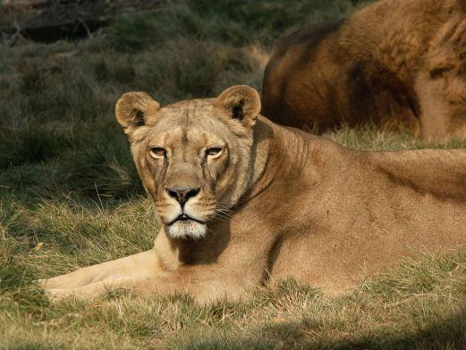 长沙生态动物园图片