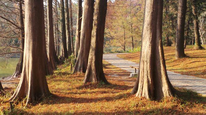 广州华南植物园 – 冬日凋零的美